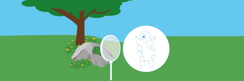 Rumbjørne (Moon Camp) Undervisningsmateriale Esero