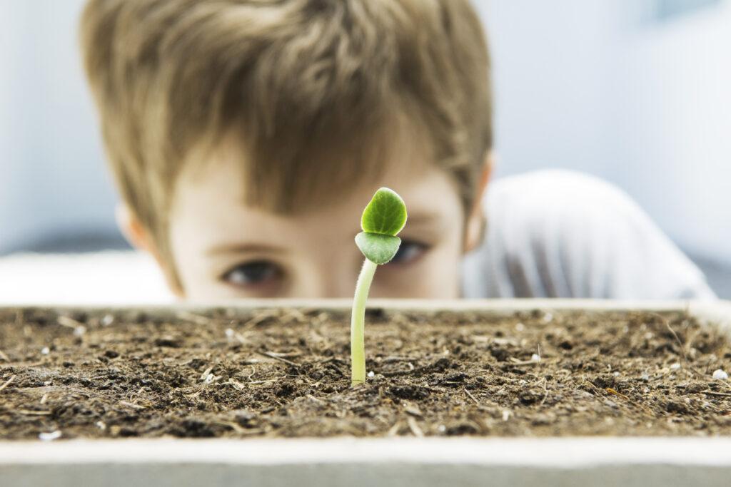 Hvilke materialer kan være gode til plantekuvøsen?