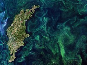 ©ESA https://www.esa.int/ESA_Multimedia/Search/(sortBy)/published?result_type=images&SearchText=ocean+currents
